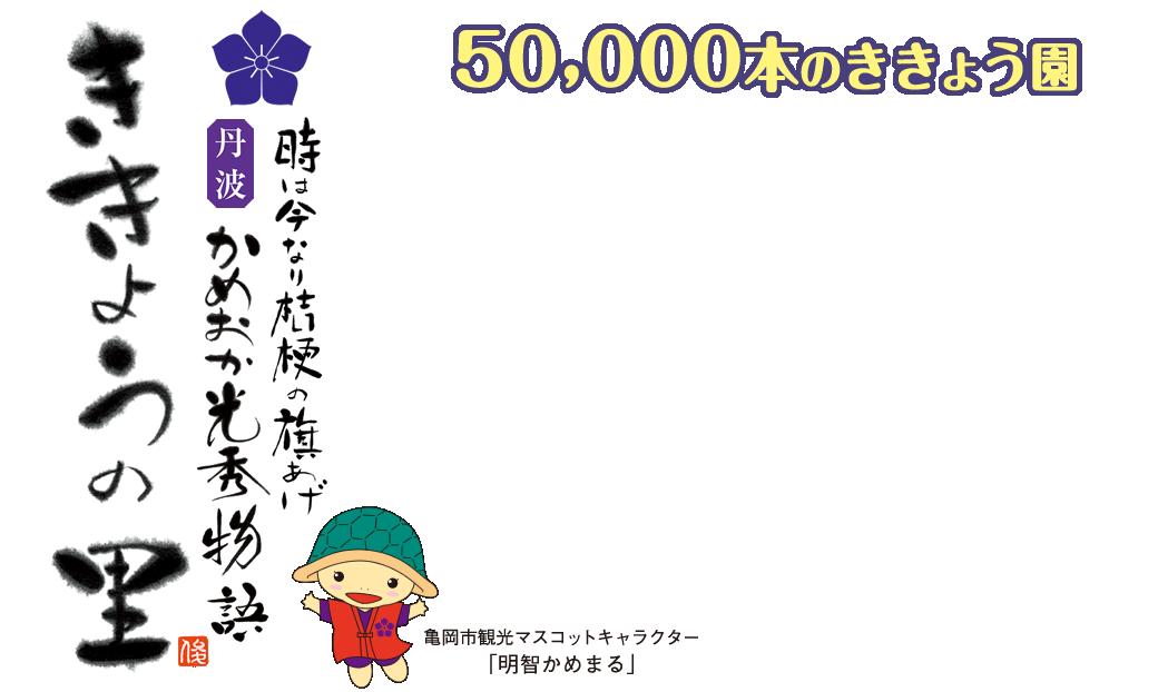 時は今なり桔梗の旗揚げ 丹波亀岡光秀物語 ききょう園 50,000本のききょう園