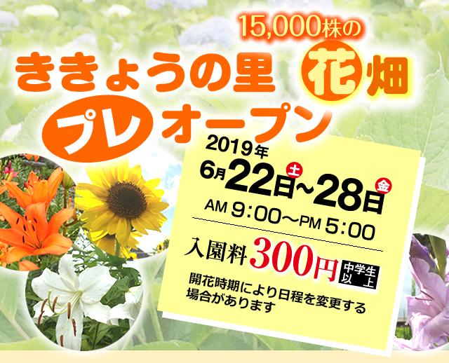 ききょうの里15,000株の花畑プレオープン 2019年6月22日土曜日~28日金曜日 午前9時~午後5時 入園料300円(中学生以上)開花時期により日程を変更する場合があります