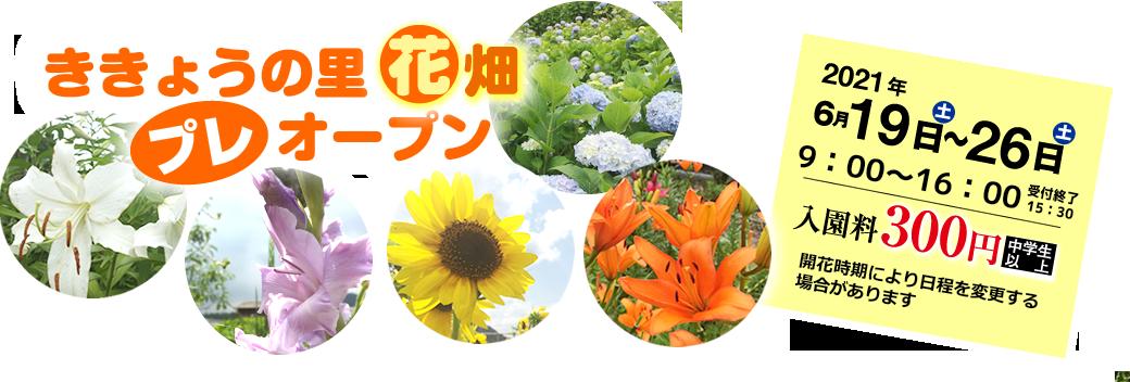 ききょうの里花畑プレオープン 2021年6月19日土曜日~26日土曜日 午前9時~午後4時 入園料300円(中学生以上)開花時期により日程を変更する場合があります